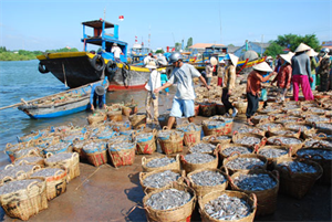 Binh Thuan Fisheries - On the way of integration and development