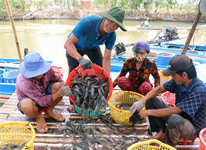 Binh Thuan's fisheries sector has developed into a key economic sector