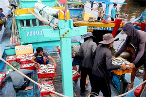 Binh Thuan: Sustainable development of the fisheries sector